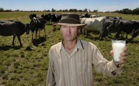 Cine castiga in industria laptelui?