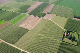 Cum sa driblezi criza facand agricultura cu cap